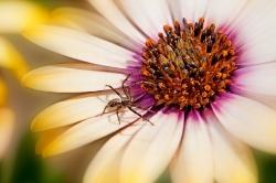 Spinne auf Blüte